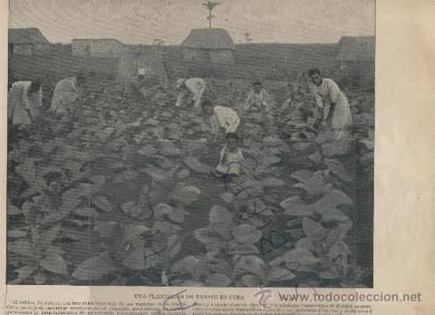 media/galleries/medium/ad2ba-plantacion-de-tabaco-antigua.jpg