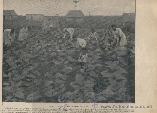 media/galleries/big/ad2ba-plantacion-de-tabaco-antigua.jpg